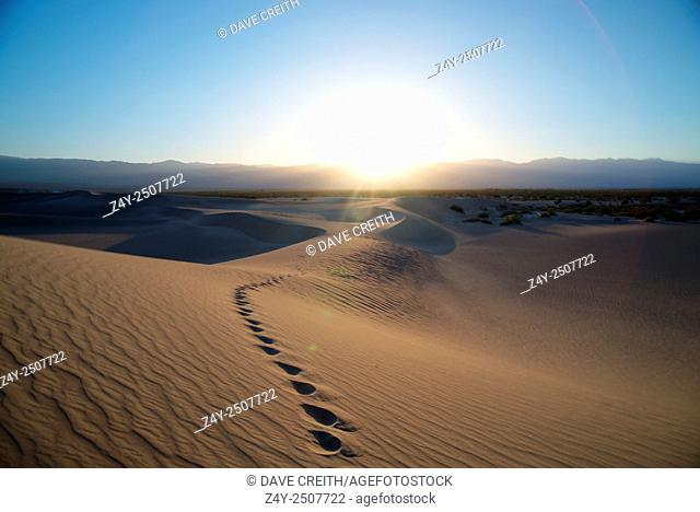 Tracks in the dunes of Death Valley at sunset, Death Valley National Park, California, USA