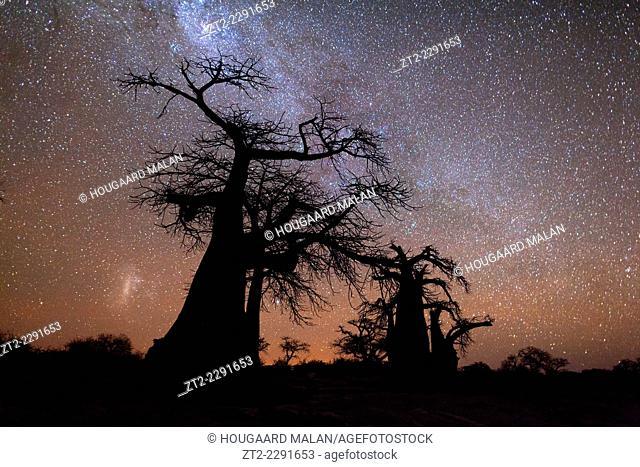 Night time landscape photo of boabab trees against a starry night sky. Kubu Island, Makgadikgadi pans, Botswana