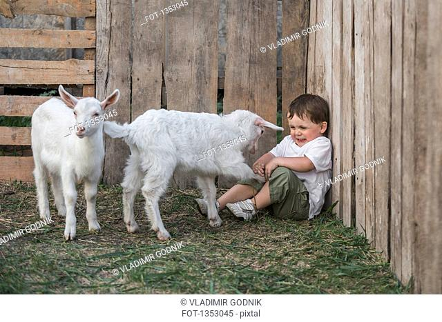 Cute boy getting scared of young goat while sitting in park