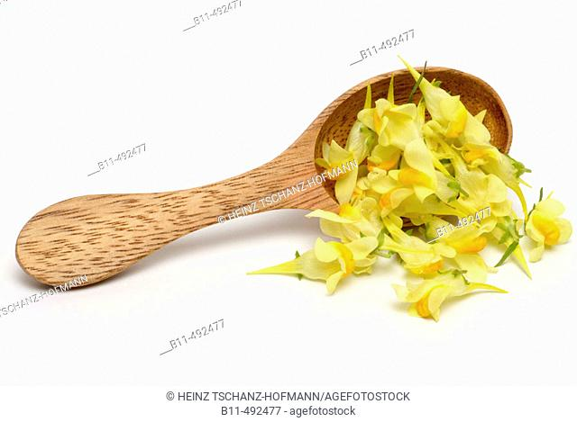 Yellow toadflax, toadflax, linajola, linaria, linajola comune, linaria vulgaris