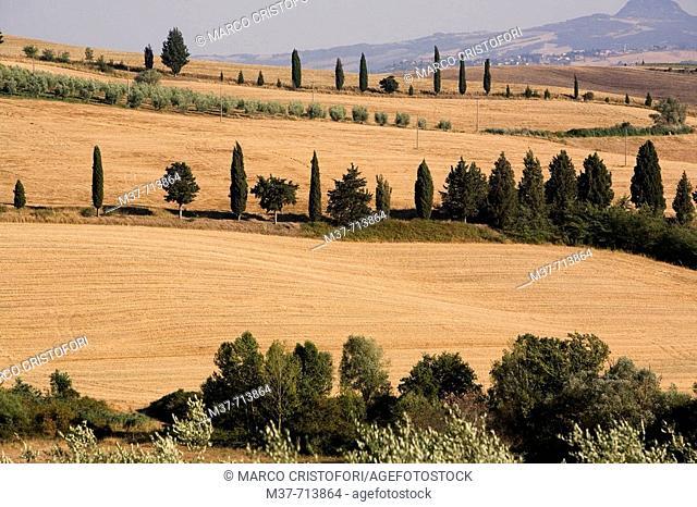 Italy. Tuscany. Val d'Orcia