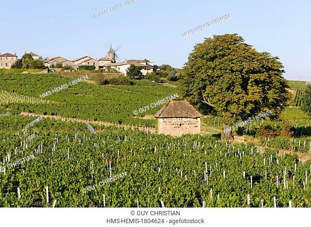 France, Saone et Loire, Moulin a Vent Beaujolais vineyard, Romaneche Thorins