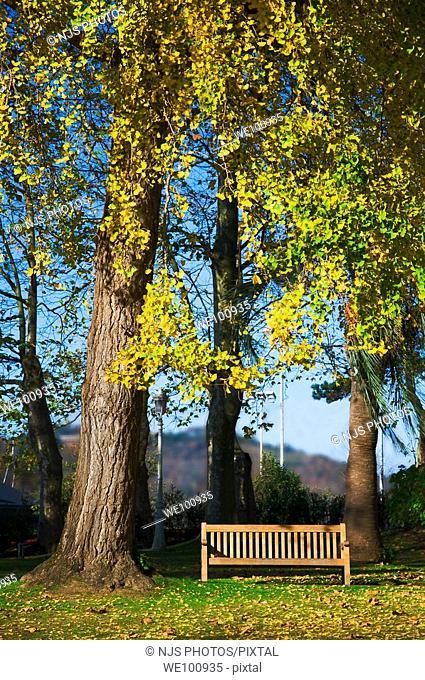 Wooden bench among the Ginkgo trees of the city park of 'Aiete' in Donostia-San Sebastián, Guipúzcoa, Basque Country, Spain