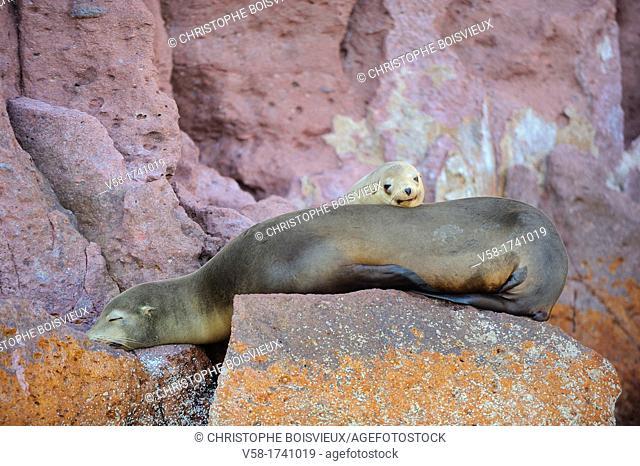 Mexico, Baja California, World Heritage Site, Los Islotes island, Sea lions