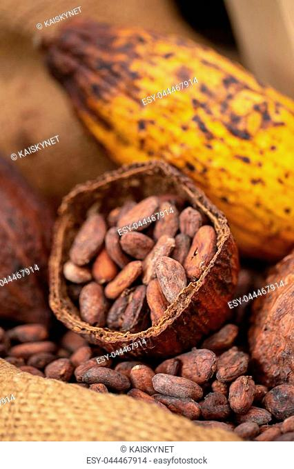 cocoa beans and cocoa pod pouring out into a burlap sack