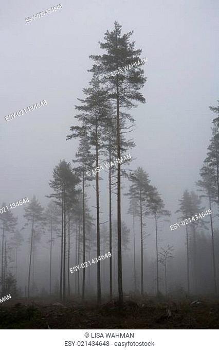 Fog landscape