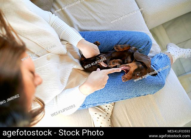 Woman playing with dog on sofa at home