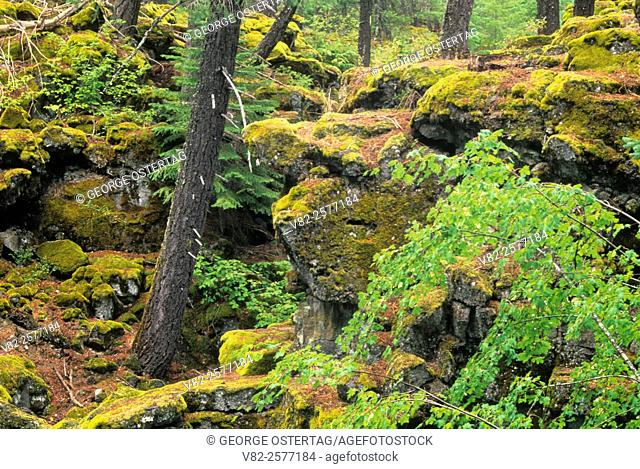 Outcrop & Douglas fir at Rogue River Gorge, Rogue Wild & Scenic River, Rogue-Umpqua National Scenic Byway, Rogue River National Forest, Oregon
