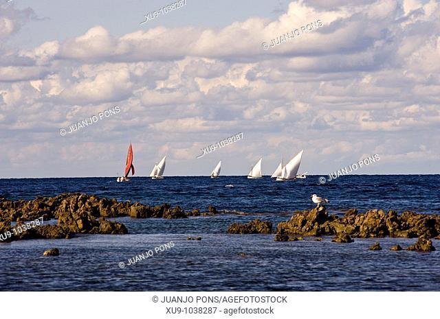 Latin sail boat race, Minorca, Balearic Islands, Spain