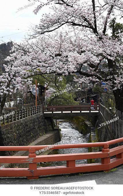 Cherry blossom by the river, Takayama city, Gifu prefecture, Japan, Asia