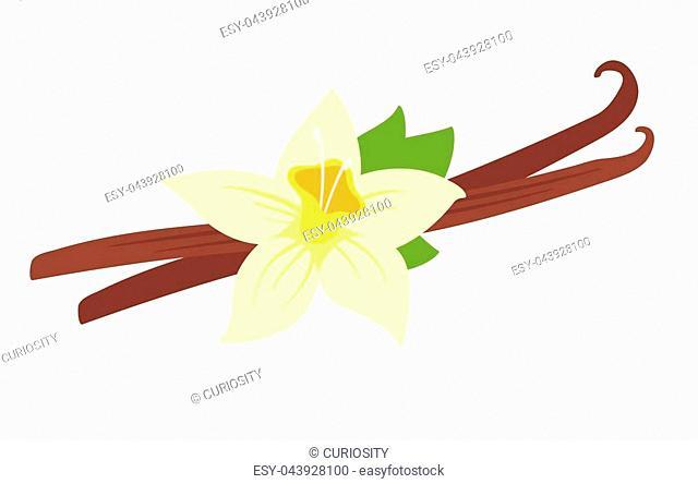 Vector cartoon style illustration of vanilla flower, isolated on white background