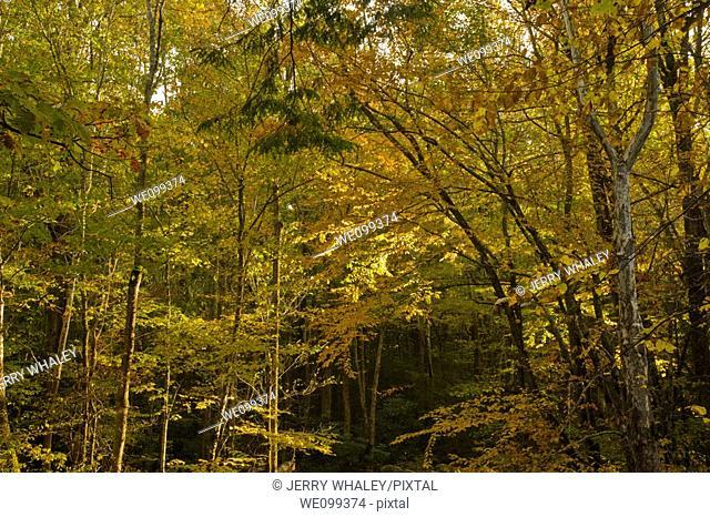 Autumn, Greenbrier, Great Smoky Mountains National Park, TN