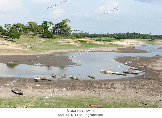 Lake with dropping water levels. Common egrets fishing along the shore. View from an upland bluff, an archaeological site with Amazonian Dark Earth (ADE) with...