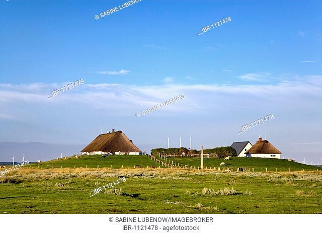 Hamburger Hallig, North Frisia, Schleswig-Holstein, Germany, Europe
