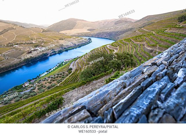 Douro valley is one of the most important and historic vineyards in Europe
