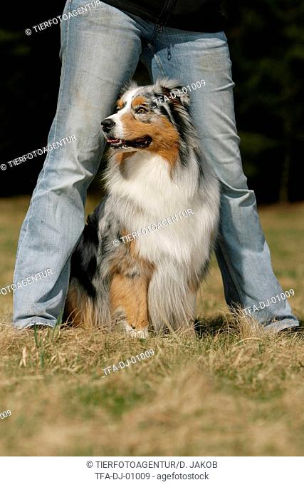 dogdance with Australian Shepherd