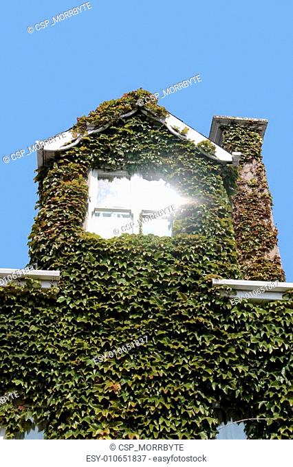 ivy window glare