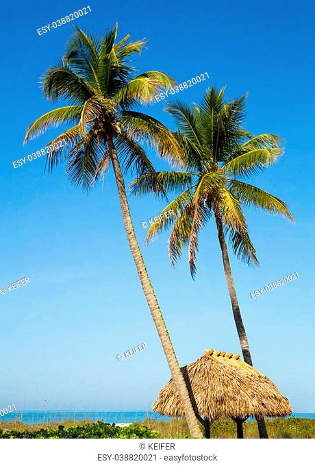 Two tall palm trees rise above a thatched tiki hut roof on a Gulf Coast beach at Sanibel Island, Florida
