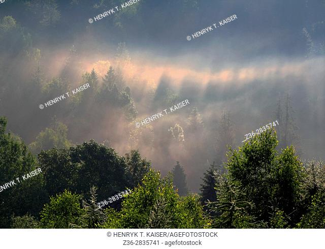 Morning mist over trees in Cisna village, Bieszczady NP, Poland