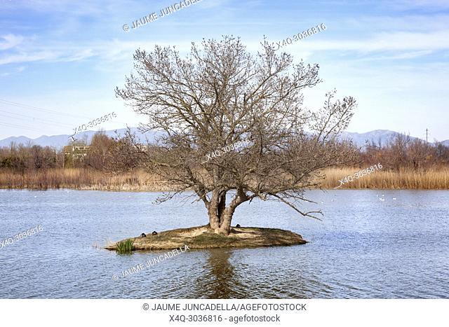 Wetland of Emporda. Girona province. Catalonia, Spain