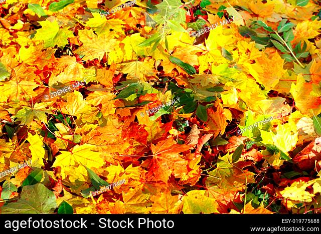 Fall orange autumn leaves on ground background