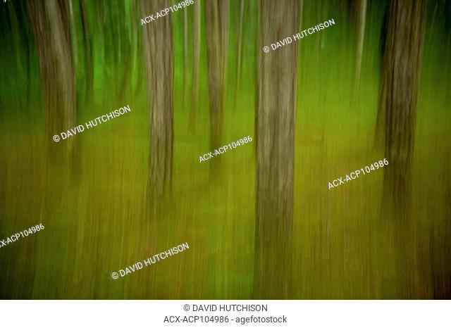 Camera Painting at Englishman River Falls Provincial Park, Vancouver Island, BC Canada