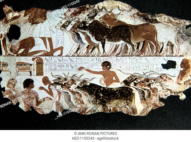 Wall painting from the tomb of Nebarunun, Thebes, Egypt, c1350 BC. The painting depicts herdsmen with cattle and a scribe (bottom left) recording details of the...