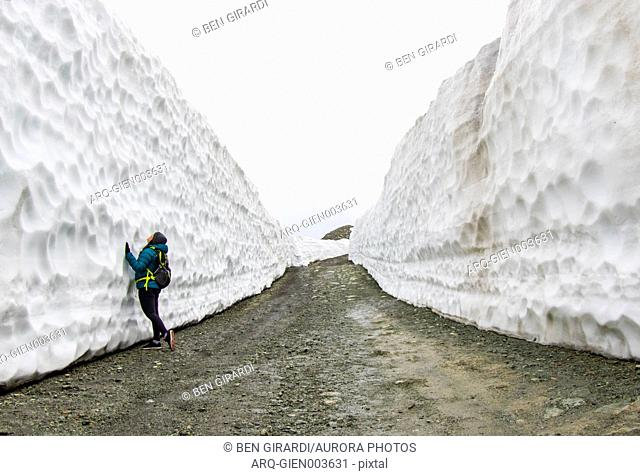 A woman hiking up a road on Whistler Blackcomb, on a gloomy spring day, were the snow has been cleared for the spring. Snow walls over 20 feet tall line both...