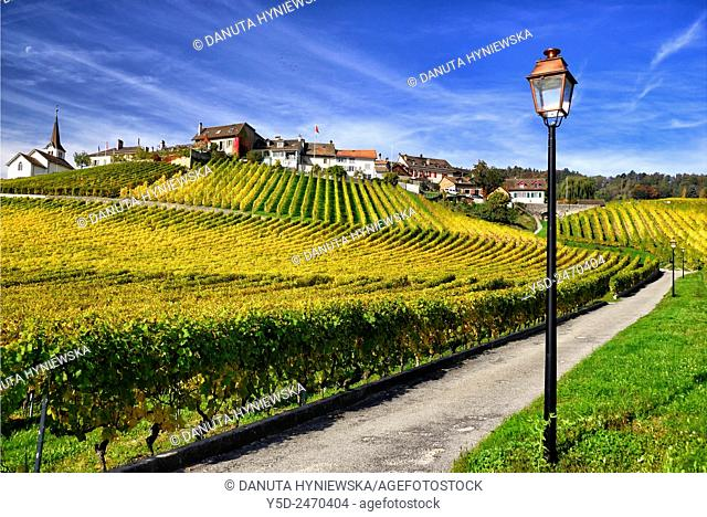 Europe, Switzerland, Canton Vaud, La Côte, Morges district, Fechy, elegant lanterns along paths in vineyards