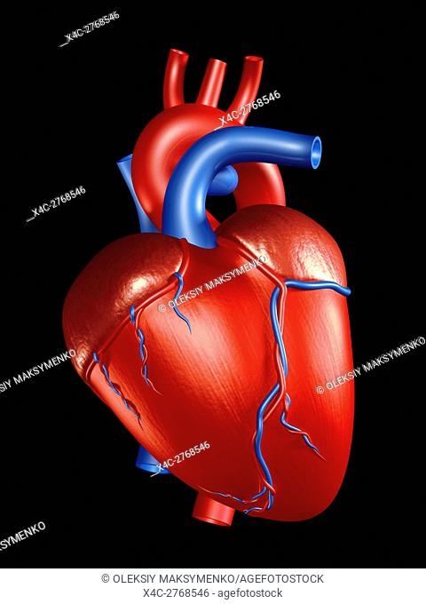Human Heart 3D Illustration isolated on black background