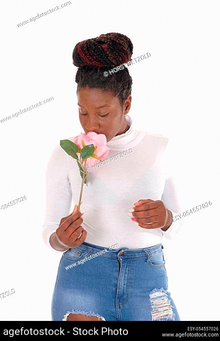 A young African American woman standing in ripped jeans, .smelling a pink rose, isolated for white background