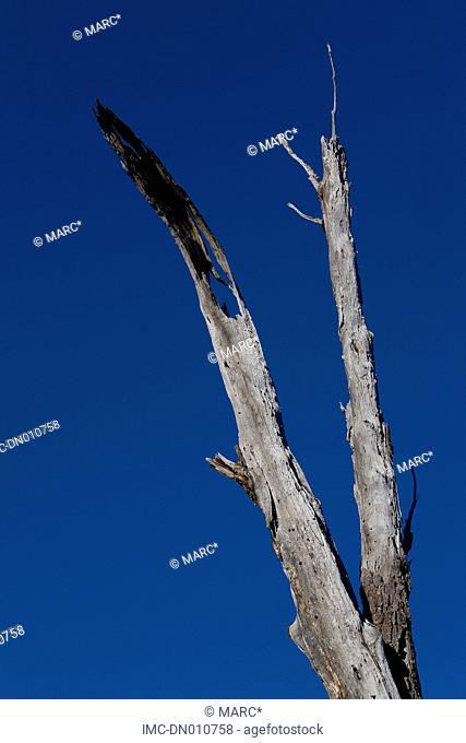 Argentina, Tierra del Fuego national park, branch
