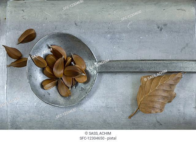 Beech seeds (Fagus sylvatica) on a metal ladle