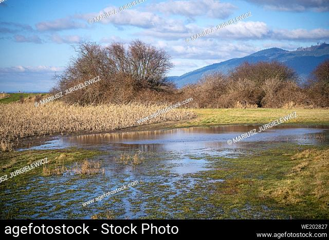 Samish Unit is comprised of agricultural fields and wetlands, located adjacent to Padilla Bay in northwest Skagit County