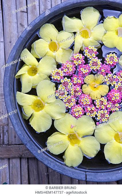 Philippines, Luzon Island, Manila area, Tagaytay Nurture Spa, flowers