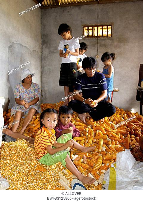 family in the middle of corn cobs, Indonesia, Sulawesi, Tomohon