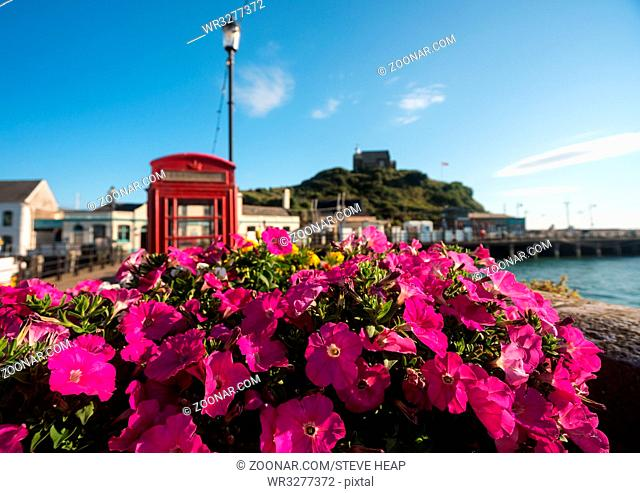 Early morning sun illuminates pink flowers in front of the harbor at Ilfracombe, Devon