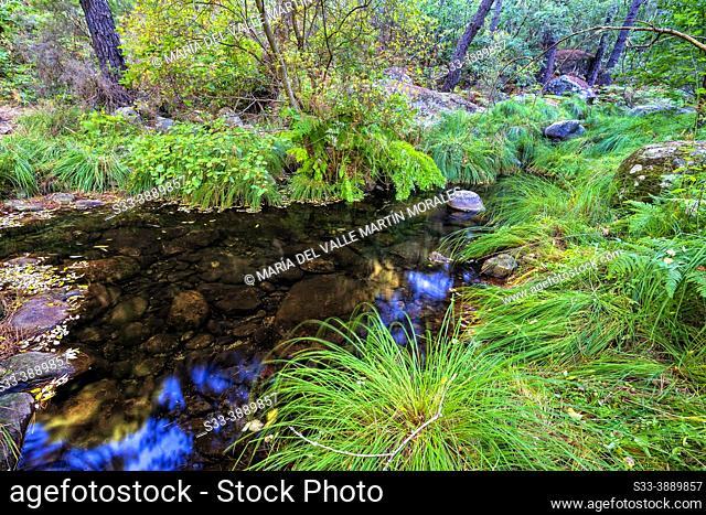 River Arbillas in Sierra de Gredos. Avila. Spain. Europe