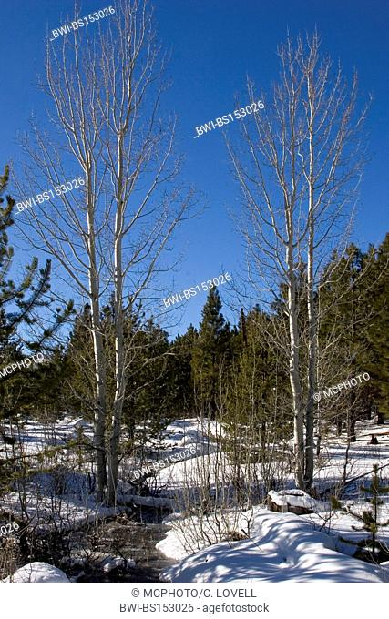 WINTER LANDSCAPE in the Deschutes National Forest near Three creeks lake Road, USA, Oregon