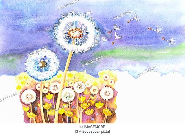 Flower, Watercolor painting of dandelion in nature