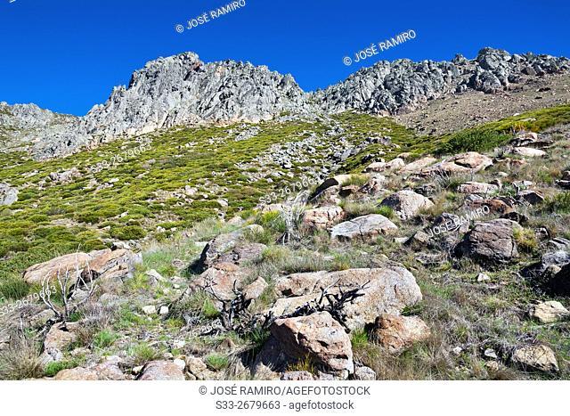 The Gamonosa in the Sierra de Gredos. Mijares. Avila. Castilla Leon. Spain. Europe