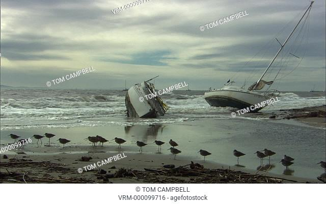 Boats washed ashore in winter storm shorebirds in FG. West Santa Barbara, California, USA