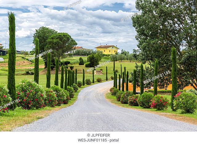 Italy, Tuscany, Monsummano Terme, country road