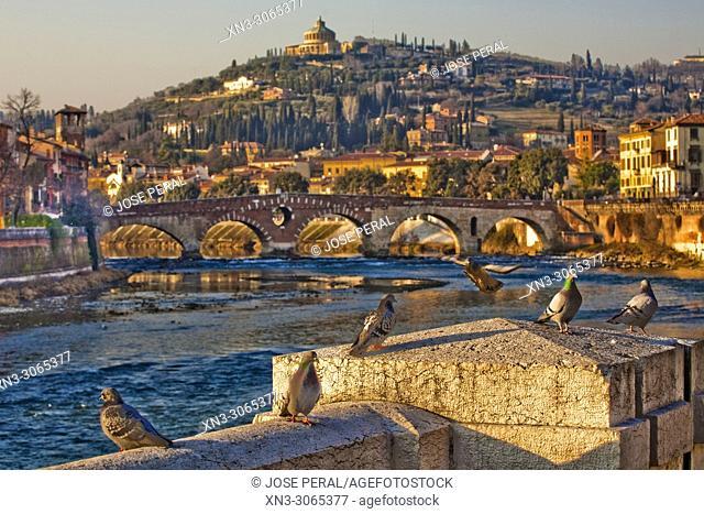 On background Roman Ponte Pietra, Stone Bridge, Pons Marmoreus, Adige River, Verona, Veneto, Italy, Europe