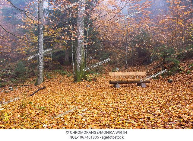 Wooden bench in autumn forest, lake Koenigssee, Schoenau am Koenigssee, Berchtesgaden Nation Park, Berchtesgadener Land, Upper Bavaria, Bavaria, Germany, Europe