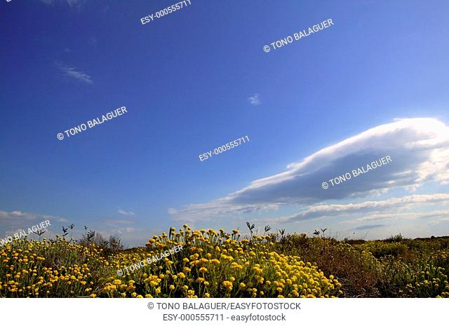 spring yellow flowers meadow blue sky background