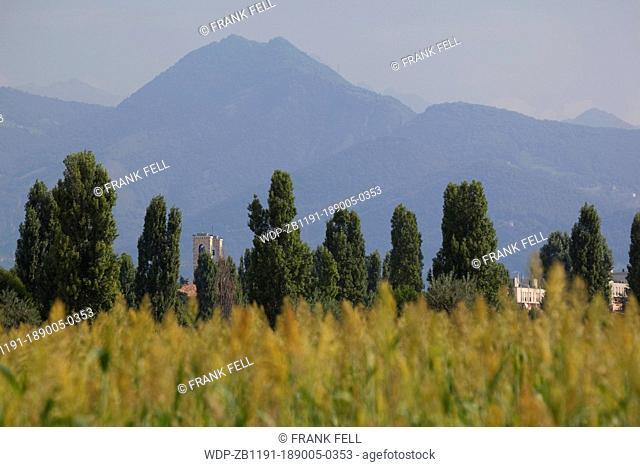 Italy, Lombardy, Bergamo, Corn Field & Mountains
