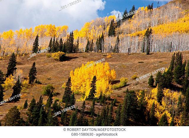 Fall color, Ohio Pass, San Juan Mountains