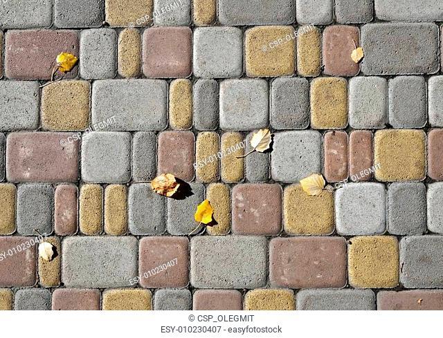 Poplar leaves on the tile pavement