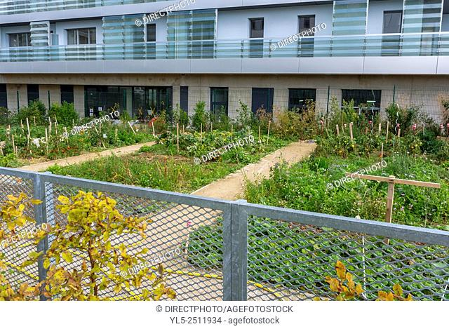 Paris, France, Community Garden in New Modern Architecture Project, Garden Martin Luther King, Neighborhood, Eco-Quartier Clichy-Batignolles
